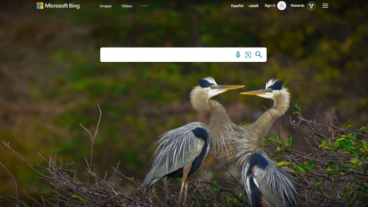 Factores de posicionamiento en Bing